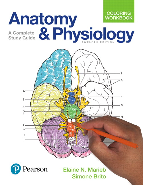 Pearson Anatomy And Physiology Coloring Workbook A Complete Study