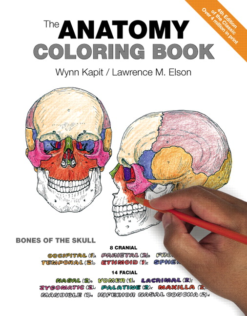 View Larger Cover Anatomy Coloring Book