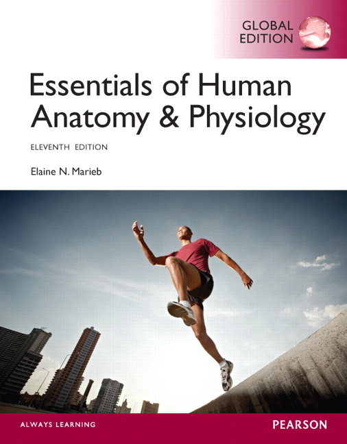 Pearson Essentials Of Human Anatomy Physiology Global Edition