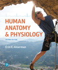 Human Anatomy & Physiology, 2/e [book cover]
