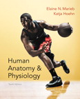 Human Anatomy & Physiology, 10/e [book cover]