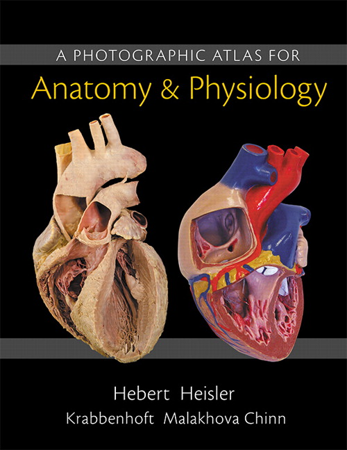 product image for Photographic Atlas for Anatomy & Physiology, A