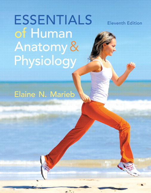 product image for Essentials of Human Anatomy & Physiology